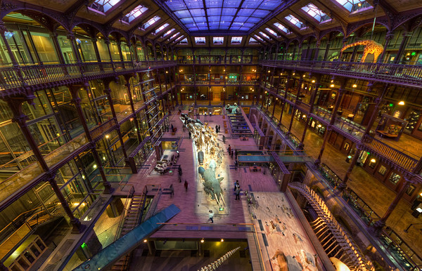 Natural History Museum in Paris