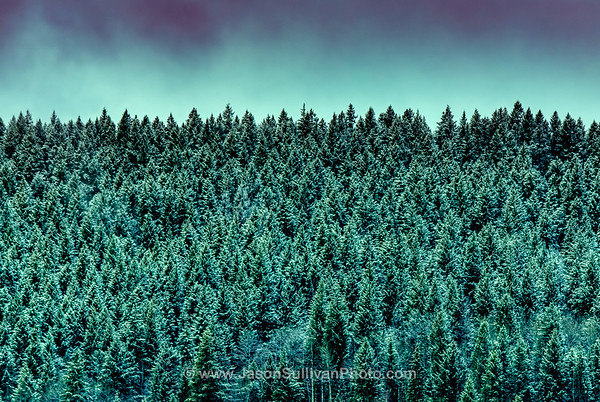 Dusted Forest