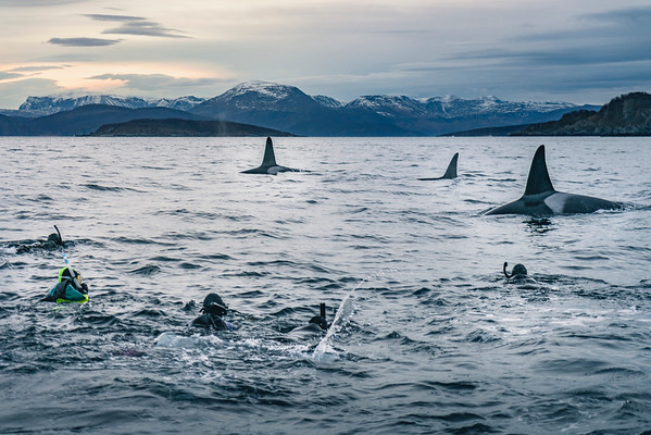 Freediving With Orcas in Northern Norway 2018