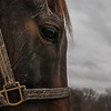 Retired race horse Brass Hat grazes at his home in Frankfort, Kentucky.