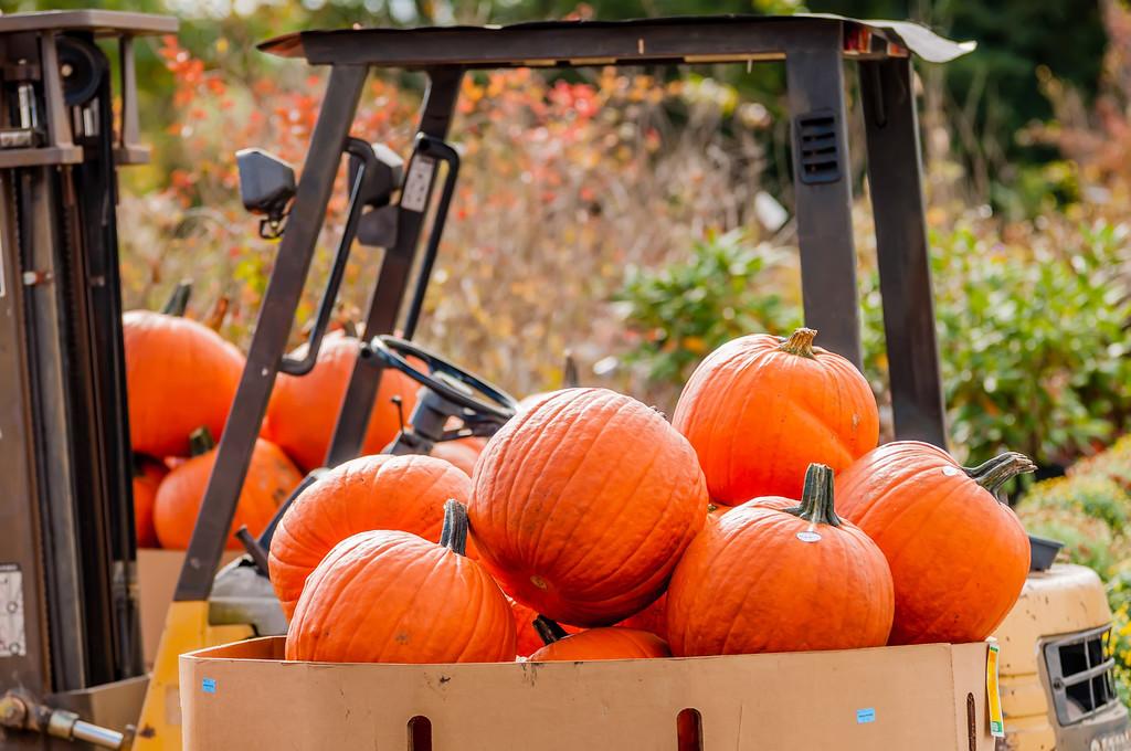 pumpkins on a pallet next to a fork lift