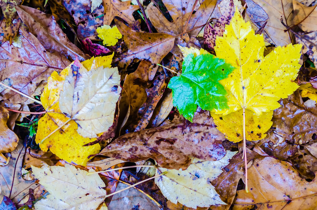 autumn season colors