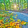 Beautiful autumn forest mountain stair path at sunset