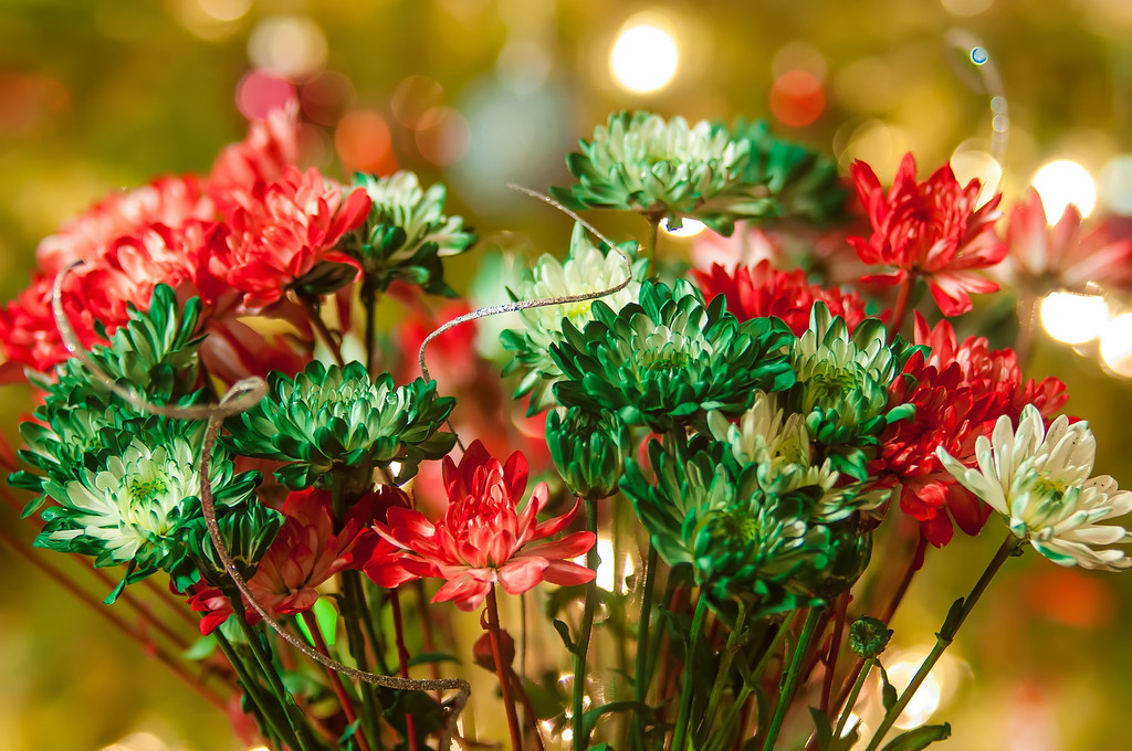 colored daisy flowers with christmas lights in back