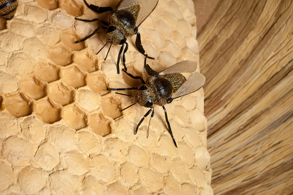 Bees convert nectar into honey and take care of larvae