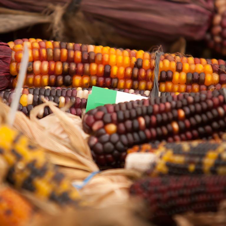 indian corn on display