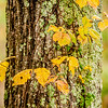 autumn leaves on a tree trunk