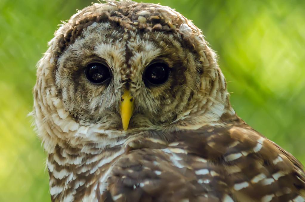 closeup of an owl