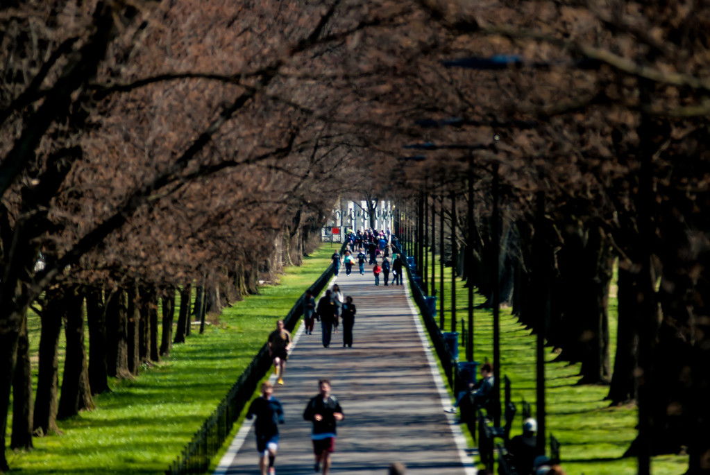 alley of trees with runners and joggers