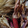 Harvest Red Corn