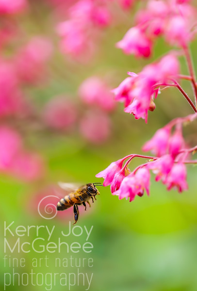 Bee with Coral Bells 2