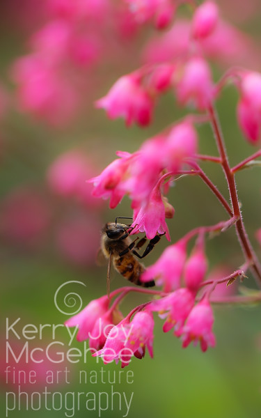 Bee with Coral Bells 1