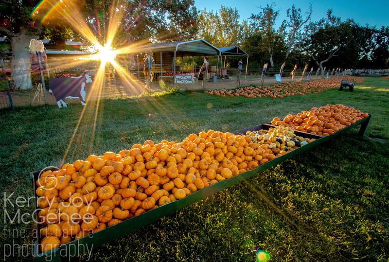 Sunrise at the Pumpkin Bin