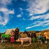 Rancher Scene