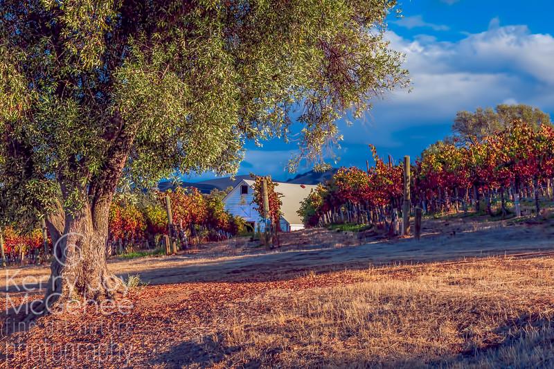 Barn in the Vineyards
