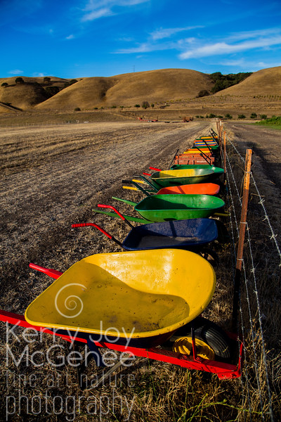 Colorful Wheelbarrows
