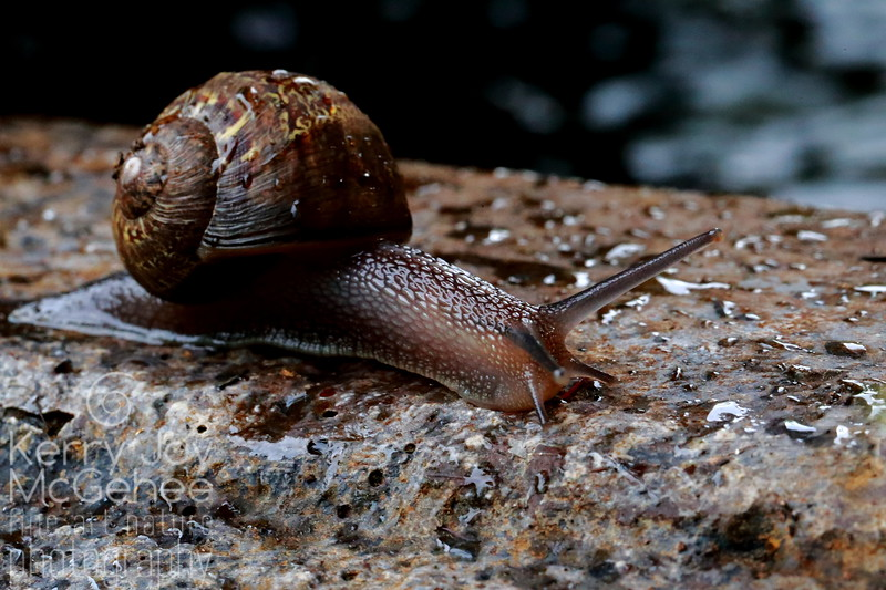 Camouflage Snail