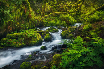 """DEEP FOREST""Columbia Gorge, OregonLush cascades and greens in the heart of the Columbia Gorge.© Chris Moore - Exploring Light PhotographyPURCHASE A PRINT"