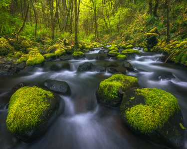 """GORTON CREEK""Columbia Gorge, OregonA beautiful cascade through mossy rocks and foliage.© Chris Moore - Exploring Light PhotographyPURCHASE A PRINT"