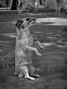 Smok'n Dog