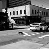 Street Photo Walk