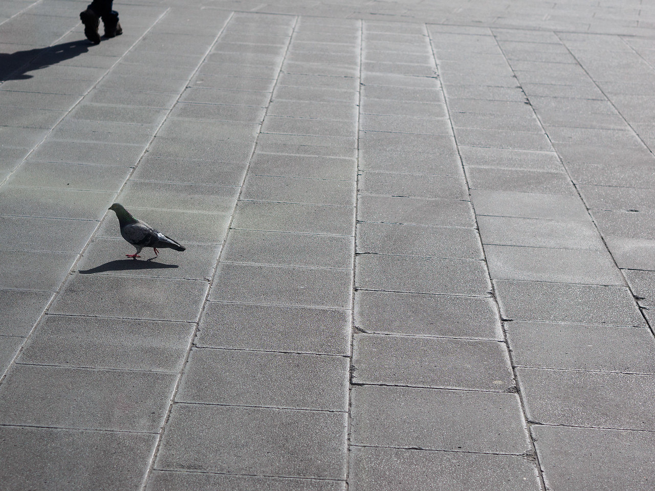 Bird + Feet