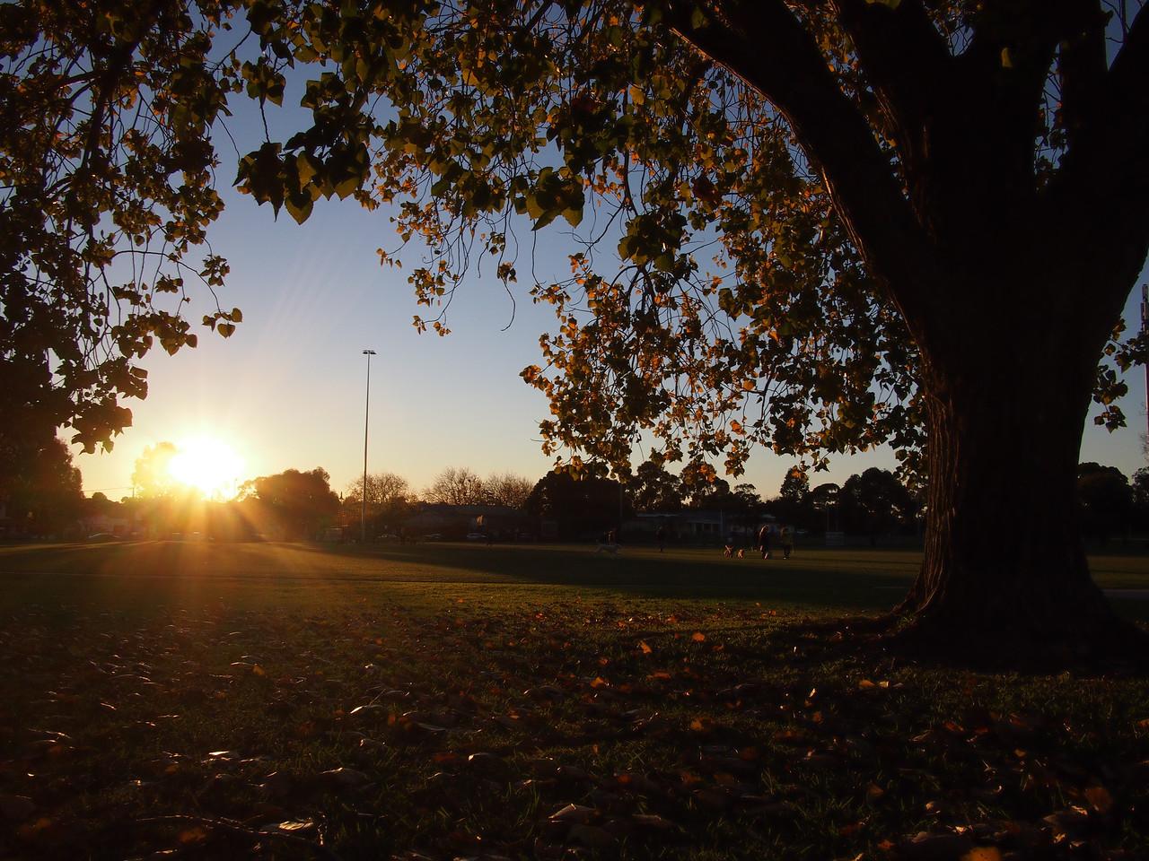 Setting sun at Princes Park