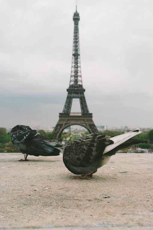 Headless in Paris