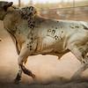 Columbia Rodeo-3672