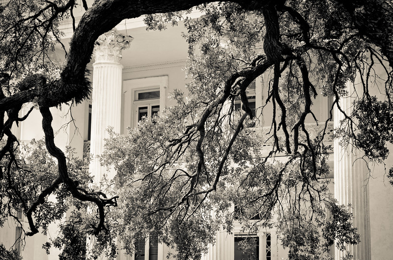 Hanging branches, Charleston, SC