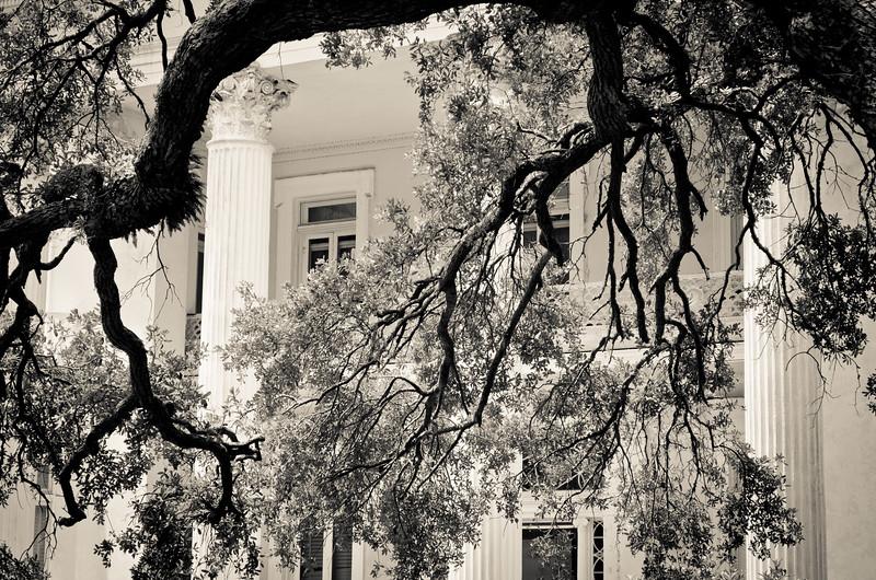 Hanging branches, Charleston, SC