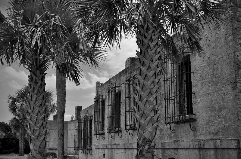 Palm trees in front of Fort Atalaya in Huntington Beach State Park, SC.