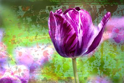 Tulip Purple Art