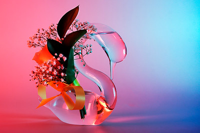 Colorful Swan - © Simpson Brothers Photography