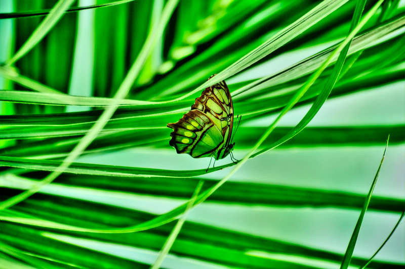 Butterfly at the California Academy of Sciences, San Francisco - © Simpson Brothers Photography