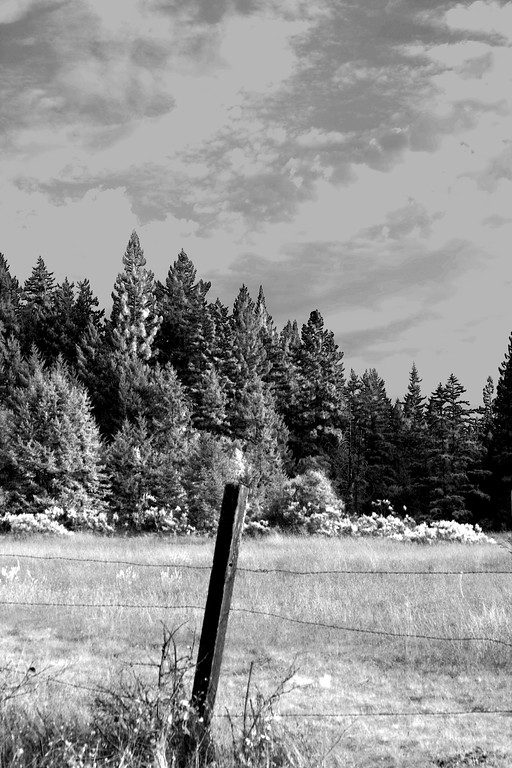 Field located at the western end of UCSC (University of California Santa Cruz) - © Simpson Brothers Photography