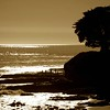 People Enjoying the Late Sun on a Reef in Santa Cruz California - © Simpson Brothers Photography