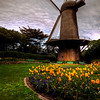 Queen Wilhelmina Tulip Garden at the Dutch Windmill - © Simpson Brothers Photography
