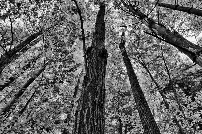 Canopy - Waterbury, VT