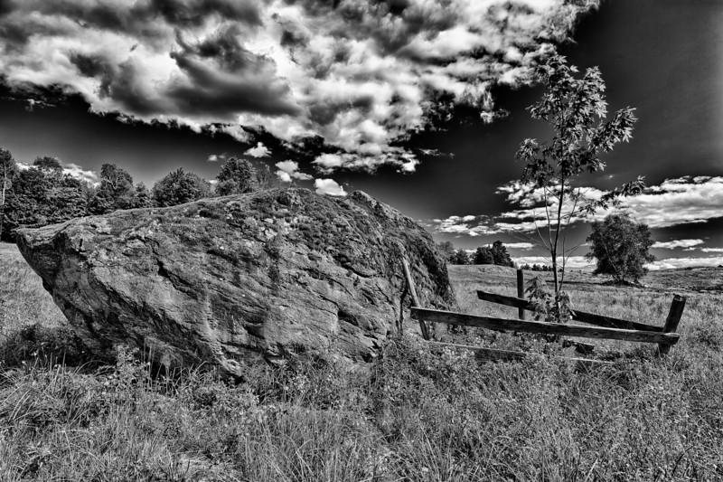 Tree Fence - Wolcott, VT