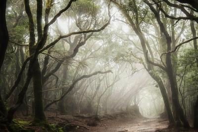 Mystical forest of Anaga