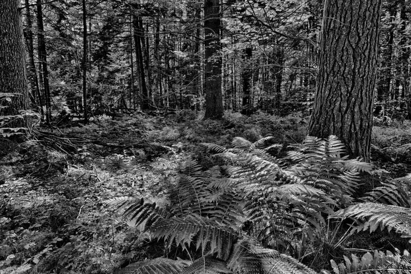 Wiessner Woods - Afternoon, August 12, 2012