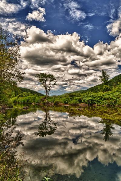 Reflecting tree - Hancock, VT