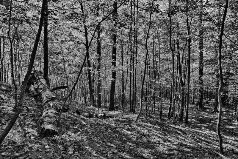 Dappled Hillside - Stowe, VT