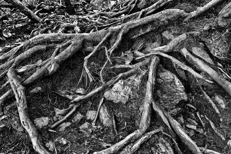 Rooted - Waterbury, VT