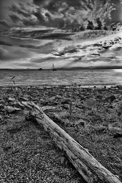 Waterfront driftwood - Burlington, VT