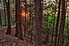 Waterbury Trees - Waterbury, VT