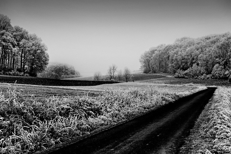 Guentersleben Fields