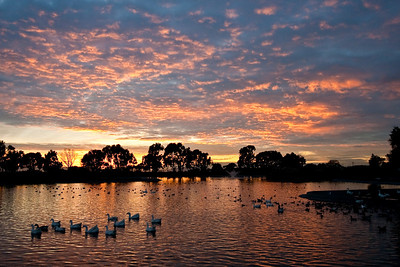 9969 Duck Pond Sunset