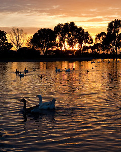 9894 Duck Pond Sunset